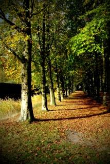 Beautiful autumn...